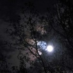image of moon seen through tree